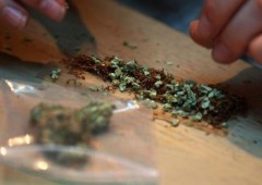 Marijuana legalizzata in Colorado, Washington. Oregon dice no