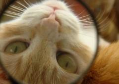 Questo gatto ha più fiuto del vostro gestore