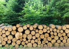Addio Gunns: ko colosso del legname australiano