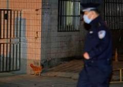 Torna l'influenza aviaria: mercati asiatici sotto stress