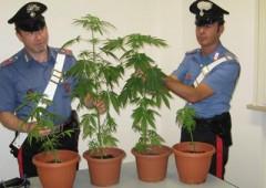 Coltivazione marijuana a uso personale non sempre reato