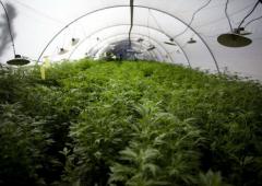 Marijuana quotata in borsa? In Usa ci provano