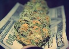 Investire in marijuana è più pericoloso che fumarla