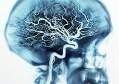 """La """"coscienza"""" esiste nella materia. E' scritta nel nostro cervello"""