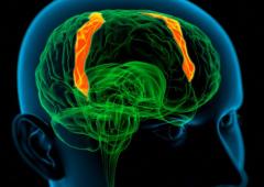 Con queste protesi al cervello non perderemo più la memoria