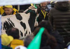 Coldiretti: il latte italiano rischia il fallimento