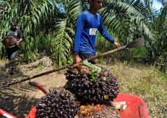 Nuovo allarme olio di palma, ritirati 120 prodotti
