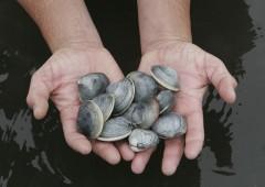 Tumori: scoperto contagio fra diverse specie di molluschi