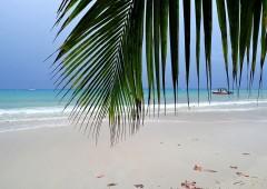 Nuovo resort di lusso costruito sugli alberi arriva alle Seychelles