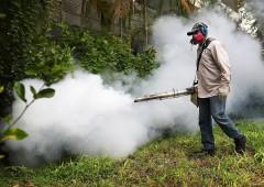 Miele: crolla la produzione a causa dei pesticidi. In serio pericolo vita api