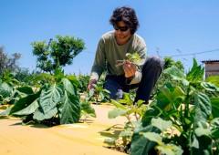 Prodotti bio: Italia prima in Europa e seconda al mondo