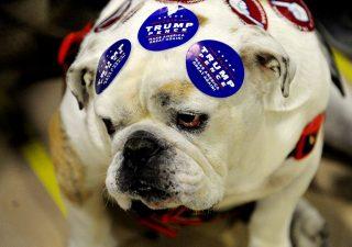 Elezioni Usa: Democratici schierano gli amanti dei cani contro Trump