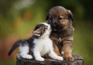 Animali domestici, un mercato enorme. E arriva pure il fondo tematico