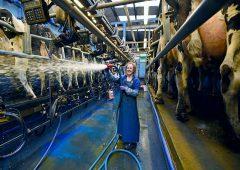 Corporate Angels: crescono finanziamenti alternativi alle pmi, potenziale da 240 miliardi di euro