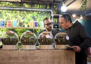 Trend 2019: titoli Cannabis surclassano criptovalute