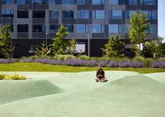 """Tutela dell'ambiente: dodici consigli """"green"""" per gli studenti universitari"""