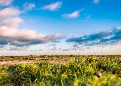 Sostenibilità, occhio al cigno verde: rivoluzione necessaria