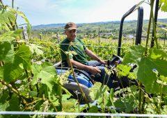 """Imprese vitivinicole, verso 2020 nero. """"Fatturato in calo di 2 miliardi"""""""
