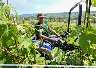 Imprese vitivinicole, verso 2020 nero.