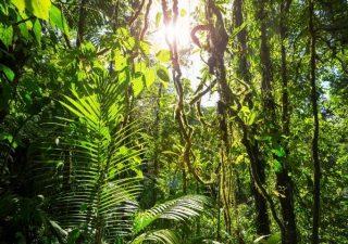 Investimenti ESG e Certificates: un binomio perfetto