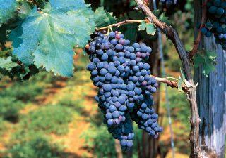 2020: un'altra annata da dimenticare per i vitivinicoltori italiani