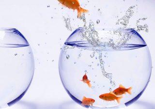 Più trasparenza nella consulenza finanziaria
