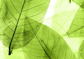 Fattore ESG: una finanza sostenibile per combattere l'impatto di Covid-19