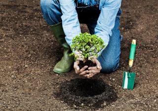 Wall Street Italia per la forestazione: per ogni nuovo abbonamento un albero piantato